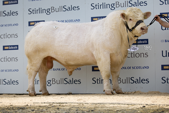 Kersknowe Horatio at 5,800gns