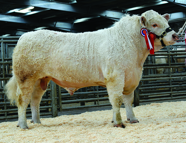 The day's Champion, Maerdy Hoelen at 5,000gns