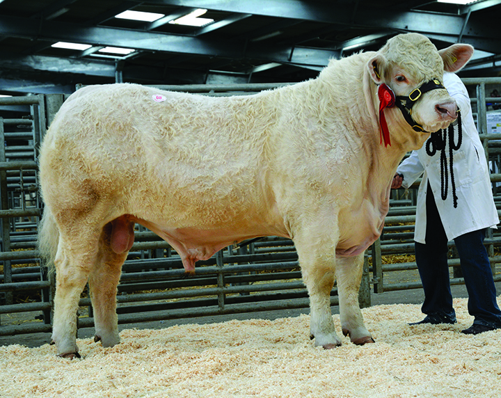 Caylers Isaac at 4,800gns