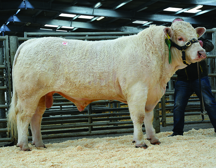 Trefaldwyn Horation at 6,000gns
