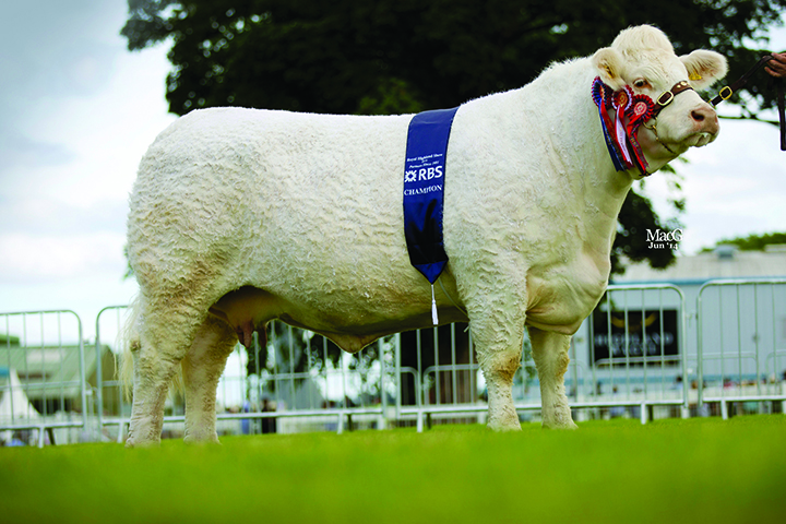 The supreme champion Charolais and reserve inter-breed champion Balmaud Eclipse