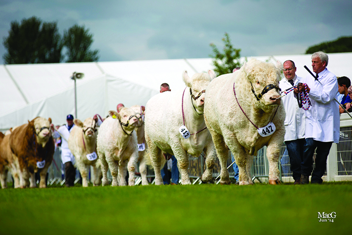 The Charolais group of four were placed in third position in the United Auctions inter-breed competition