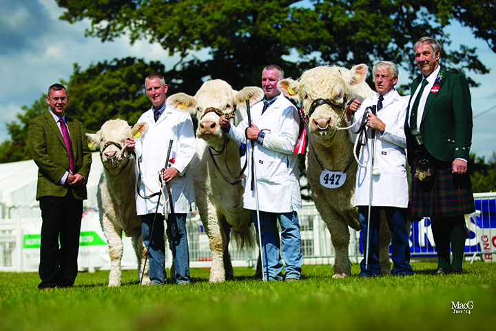 The Charolais inter-breed champion from left to right: Ian Anderson (Harbro sponsor) James and Andrew Reid with Balmaud Eclipse, Barney O'Kane with Rumsden Fawkes and the judge Dave Murray