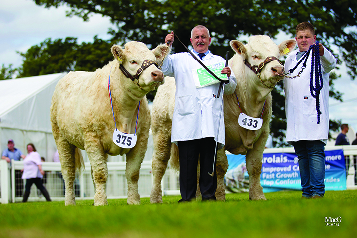 Andrew Hornall won the best pair of Charolais cattle bred by exhibitor, shown by Norman and Steve Taylor