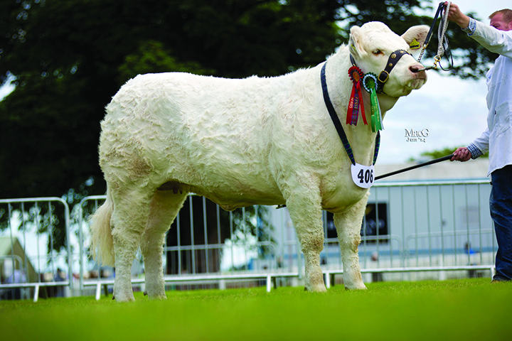 A & A Wright's Lagavaich Hermine was awarded the reserve female championship award