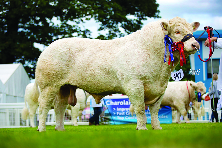The male champion and reserve supreme champion Charolais was Patrick Gallagher's Rumsden Fawkes