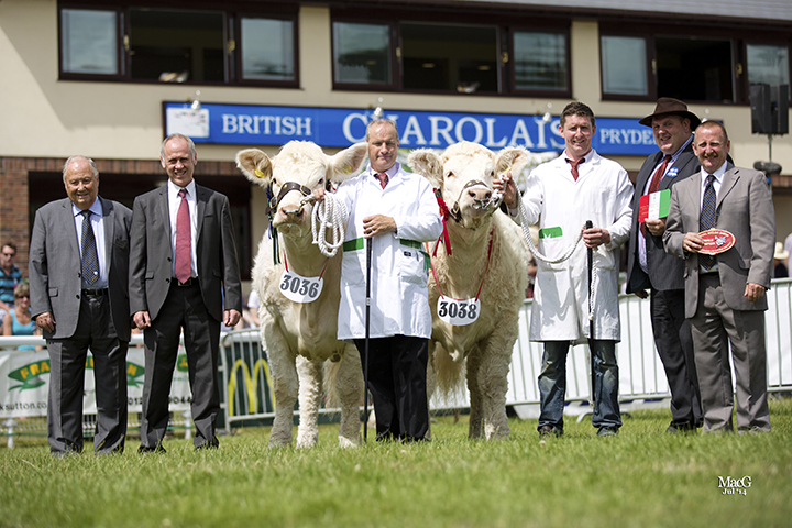 From left to right: BCCS President Mervyn Park Zoetis  sponsor Ifor Jones, Kevin Thomas with the reserve supreme champion Moelfre Halo, Nairn Wyllie with the champion Charolais Gower Highness, judge William McAllister and the BCCS Chairman Steve Nesbitt