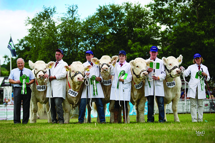 "The Charolais team were the reserve champion in the ""Group of Five"" Interbreed Competition"