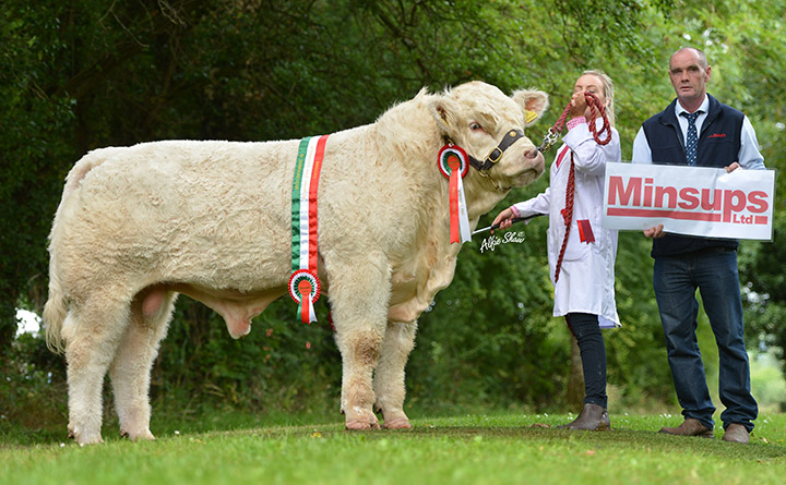 Champion intermediate bull Ratoary Icebreaker ET bred by Sean McGovern exhibited by Caoimhe McGovern