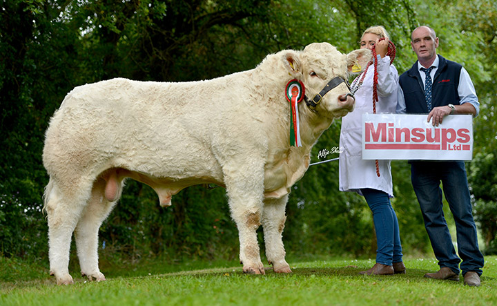 Reserve champion intermediate bull Ratoary Irishman ET bred by Sean McGovern exhibited by Eimear McGovern