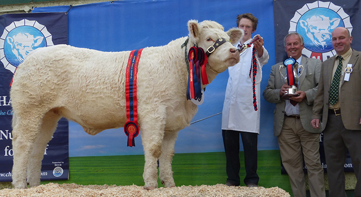 Bessibell Incredible, Supreme Female Champion owned by J Smyth, pictured with David Benson, Chief Executive British Charolais and judge Michael Durno