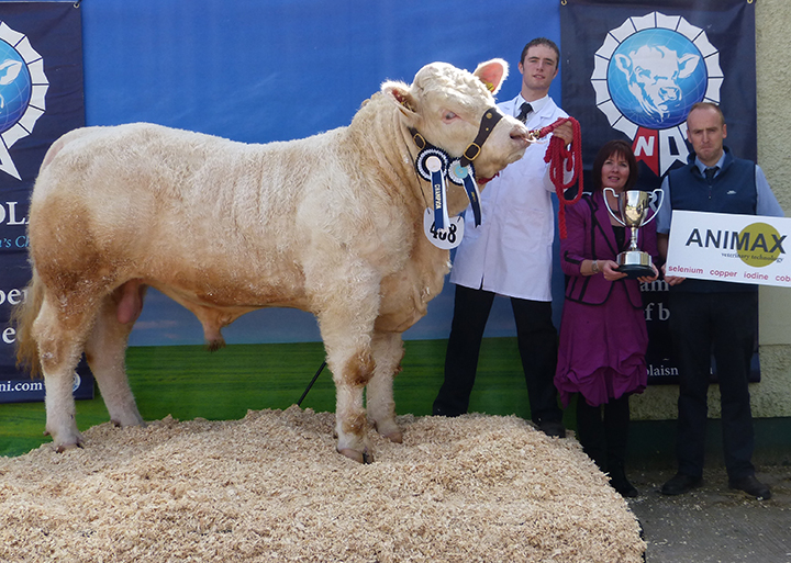 Philip Johnston ANIMAX Champion Young Handler with judge Alison Connolly, Neil Acheson Animax sponsor