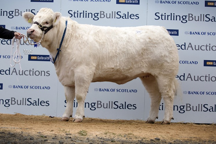 Vexour Herd at 4,000gns