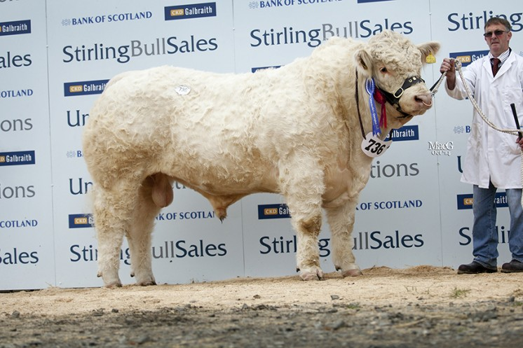 Gretnahouse Indian at 18,000gns