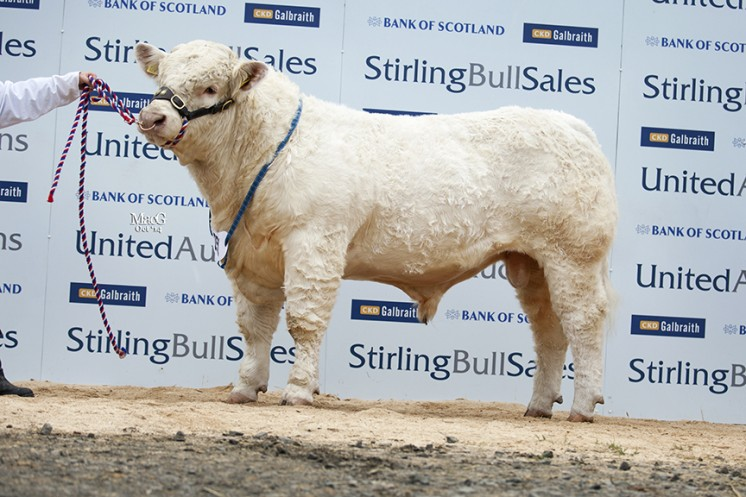 Balthayock Ivo at 9,500gns