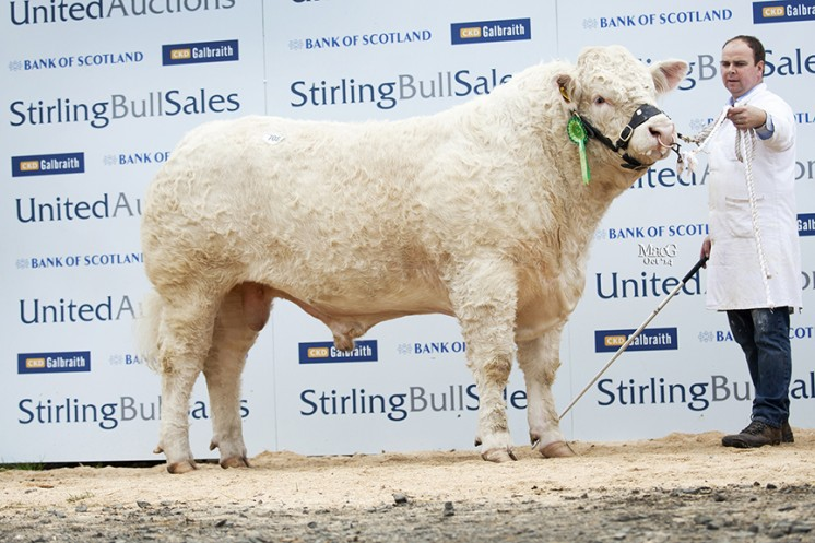 Sale leader Maerdy Ignition at 22,000gns
