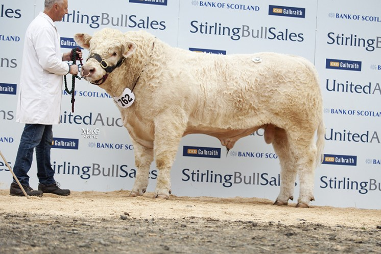 Ellerton Independent at 10,000gns