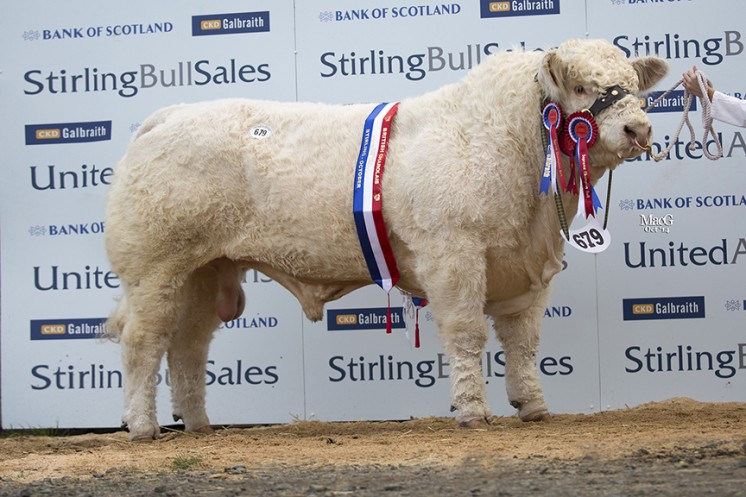 The senior and overall supreme champion Marne Impeccable at 10,000gns