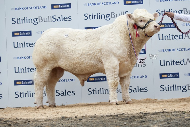 Westcarse Imperial at 9,000gns
