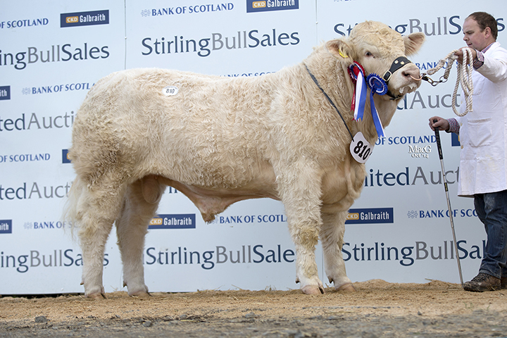 Maerdy Innes at 8,000gns