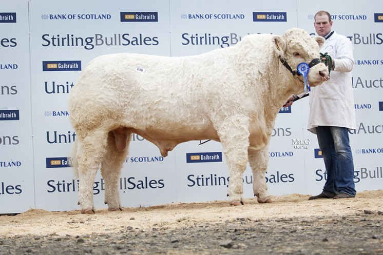 Coolnaslee Ivanhoe at 10,000gns