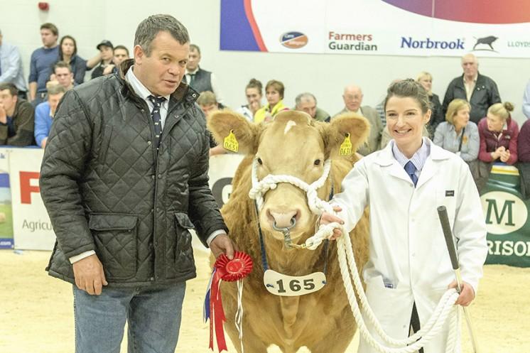 1st Prize Heifer