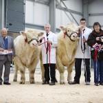 Champion Bull Bassett Icon & Reserve Champion Bull Ramrad Ivan