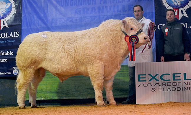 Killadeas Inverness - Reserve Junior Champion, 4,700gns - with David Bothwell, and sponsor Stephen  Berry of Excel Roofing