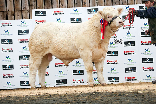 Lochend Jura - Reserve Junior Champion