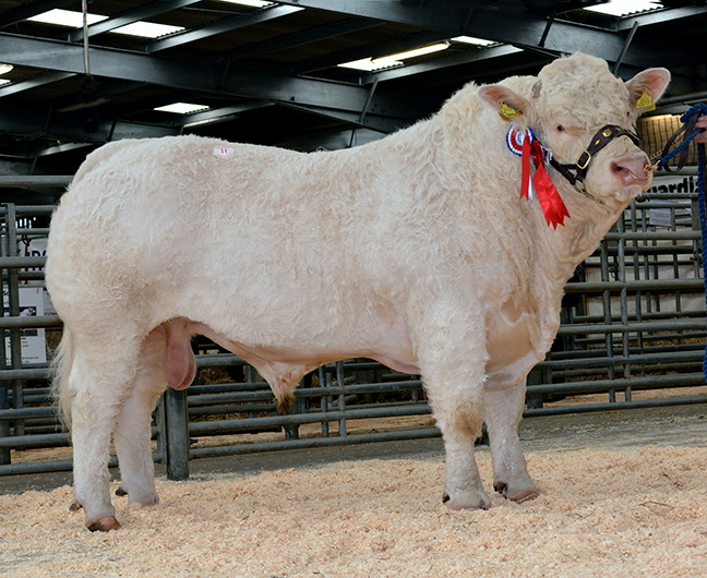 Montgomery Ianto at 5,200gns