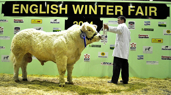 Reserve Overall Calf sired by a Charolais Bull - Boden & Davies Ltd's Senior bull Sportsmans Influence