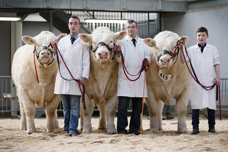 The Harestone bulls consigned by Neil Barclay won the best three bulls bred by exhibitor and sired by one sire (Inverlochy Ferdie)