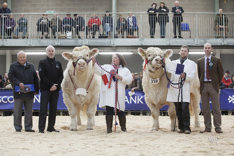 The Senior Bull Champion. Left to right: Mervyn Parker, Andrew McPhail (Bank of Scotland), Tracey Nichol with Balthayock Imperial, Matthew Milne with the reserve senior champion Elgin Ivanhoe