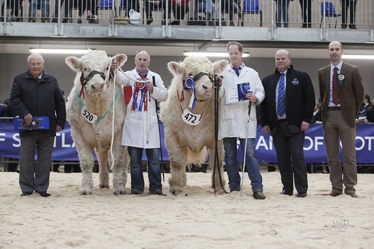 The Junior Bull Champion. Left to right: Mervyn Parker, Robert Marshall with the junior champion Blelack Imperialist, Hamish Goldie with the reserve junior champion Goldies Icon, Sandy Hay and Michael Massie