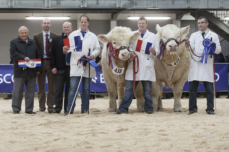 The Supreme and Intermediate bull champion.  Left to right BCCS President Mervyn Parker, judge Michael Massie, head of Agriculture Bank of Scotland Sandy Hay, Hamish Goldie, Bruce Goldie with the supreme and intermediate champion Goldies Ivan and Sean O'Brien with the reserve supreme and reserve intermediate champion Harestone Imran