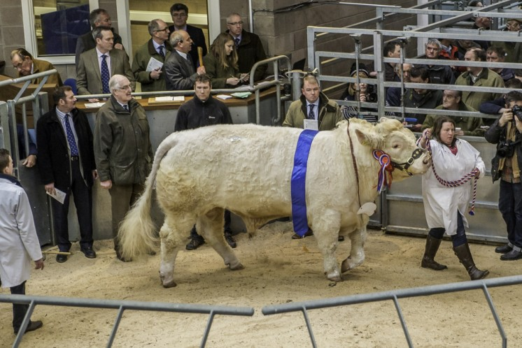 Balthayock Imperial at 11,000gns