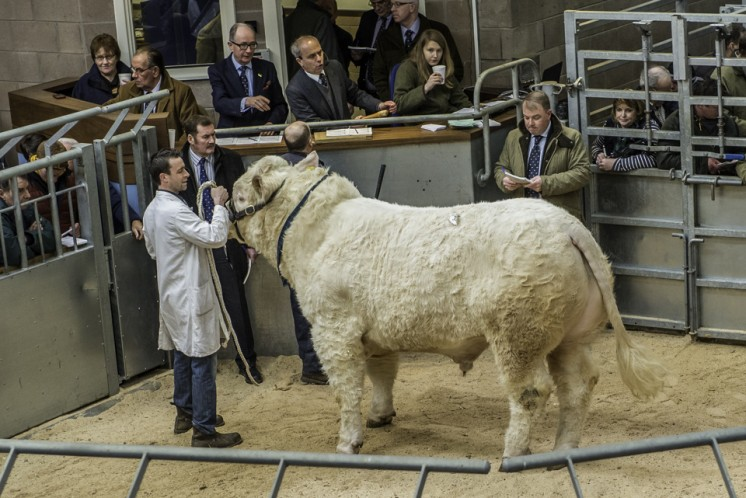Alsnow  Imperial at 12,000gns