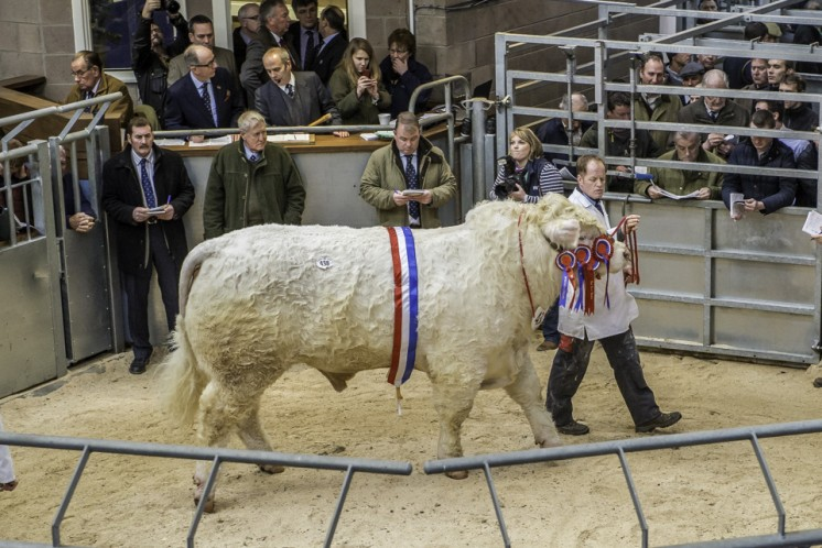 Goldies Ivan at 12,000gns