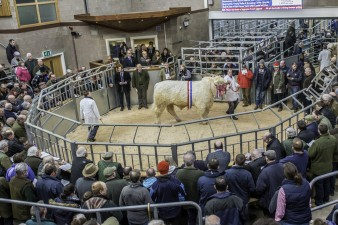 Lot 438 - Overall Champion Goldies Ivan - sold for 12000 gns (3)