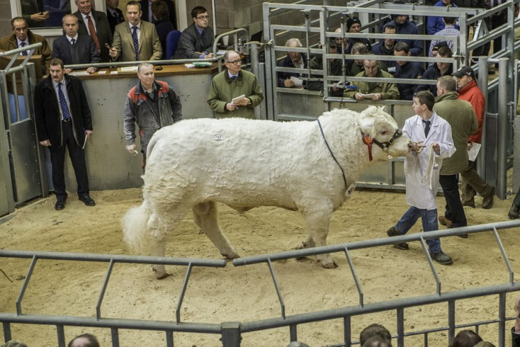 Clyth Indestructable at 18,000gns