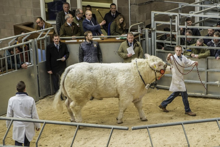 Elgin Isaac at 11,000gns