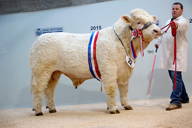 Champion Strathisla Icon 6,000gns
