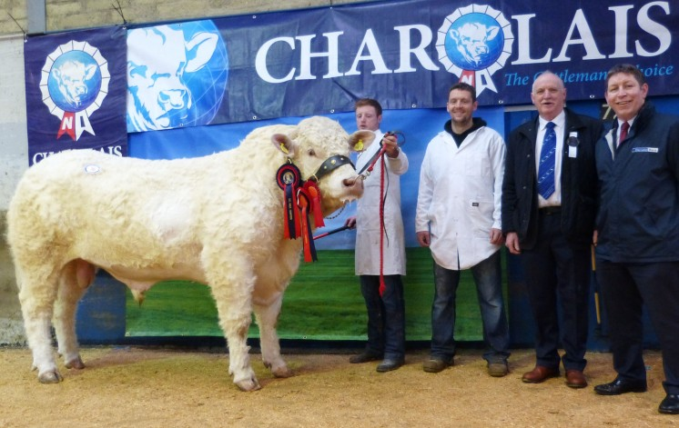 Junior Male Champion Topline International exhibited by Richard Devine with Niall O'Kane, Judge Liam Devine and sponsor Rodney Brown of Danske Bank