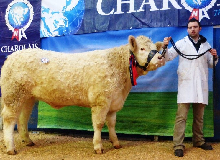 Reserve Female Champion Moorlough Ivy exhibited by James McBride