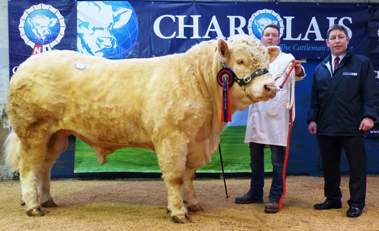 Tullygarley Imp fetched highest price of 5,400gns, exhibited by JK Currie with Rodney Brown from sponsors Danske Bank