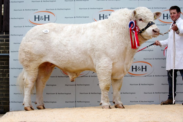 The supreme and senior champion Marwood Intrepid sold for 7,800gns