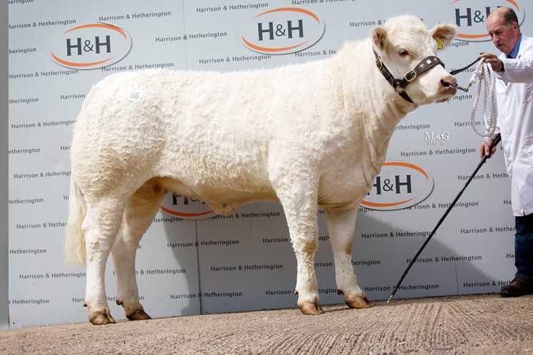 The 8,200gns Female champion Alsnow ISla