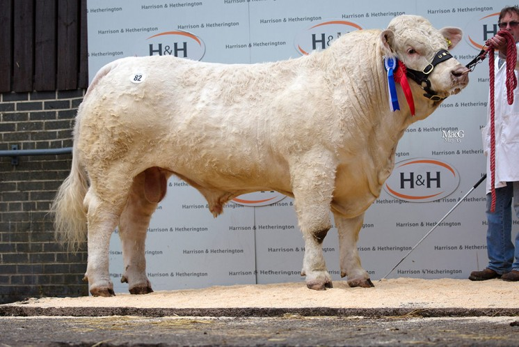 The reserve intermediate champion Gretnahouse Ivory also sold for 10,000gns
