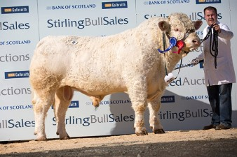 Ballinlare Indepence 5,500gns
