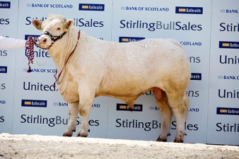 Balthayock Immortal 6,800gns